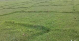 विद्यालयको जग्गामा स्थानीय किसानको आफूखुशी भोगचलन